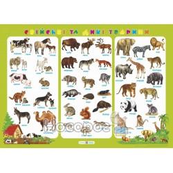 .ПіП Плакат Свійські та дикі тварини