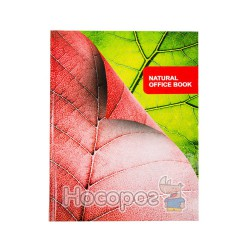 Книга канцелярская Мицар А4, 176 л.