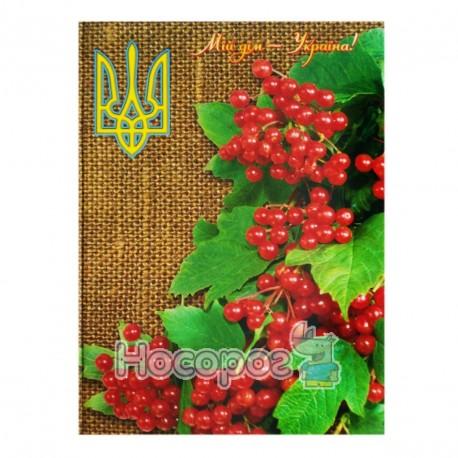 Фото Книга канцелярская Мицар ТП А4, 192л.