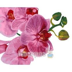 Картина по номерам Розовая орхидея AS0124