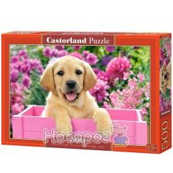 Пазл «Castorland» Labrador Puppy in Pink Box 500