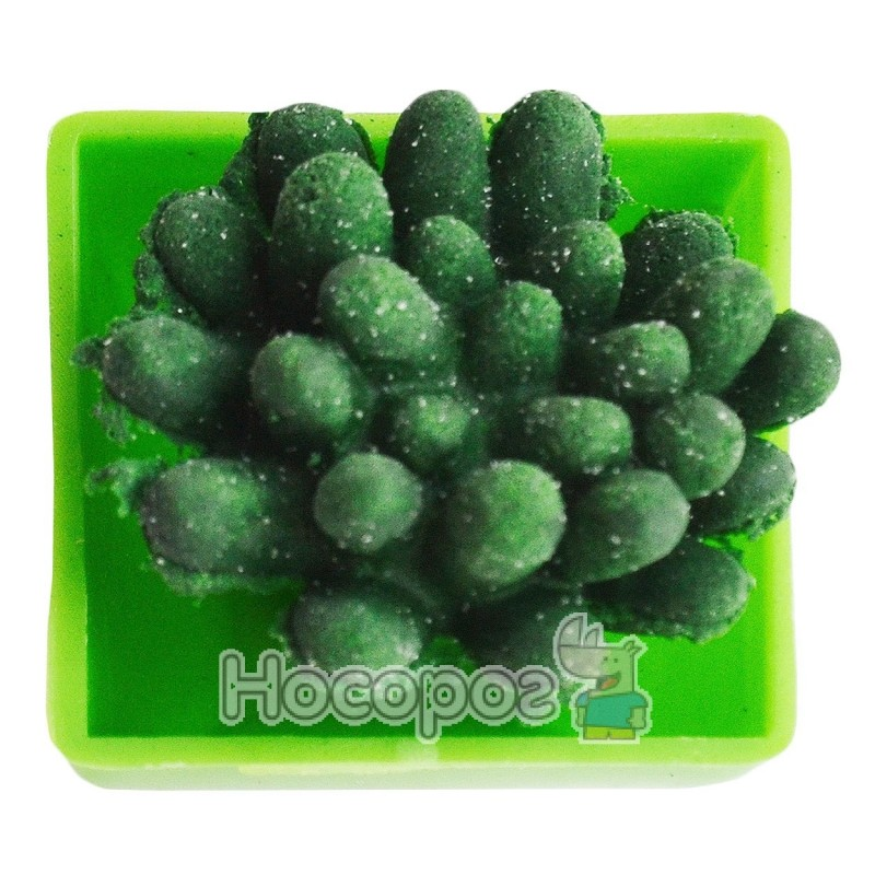 Фото Вырастайка вырасти зеленый кактус №8081