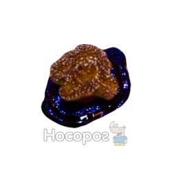 Вырастайка кораллы №8075