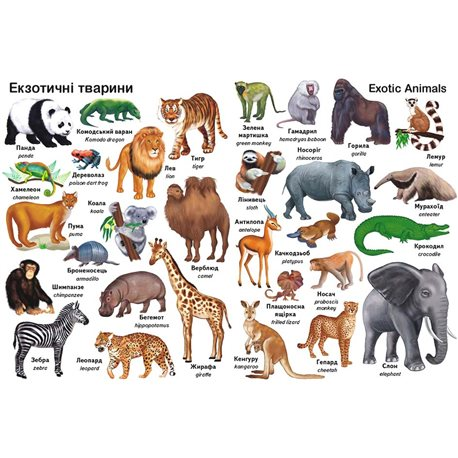 Фото Первые слова. Животные. + Английский [9789669474957]