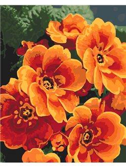 Картины по номерам - Примула оранжевая (КНО3050)