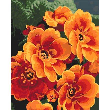 Фото Картины по номерам - Примула оранжевая (КНО3050)