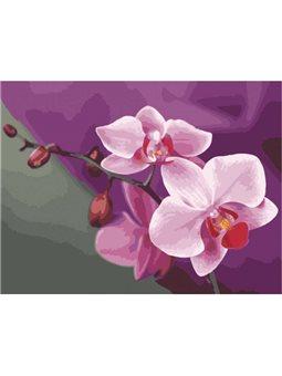 Картина по номерам Розовые орхидеи [КНО1081]